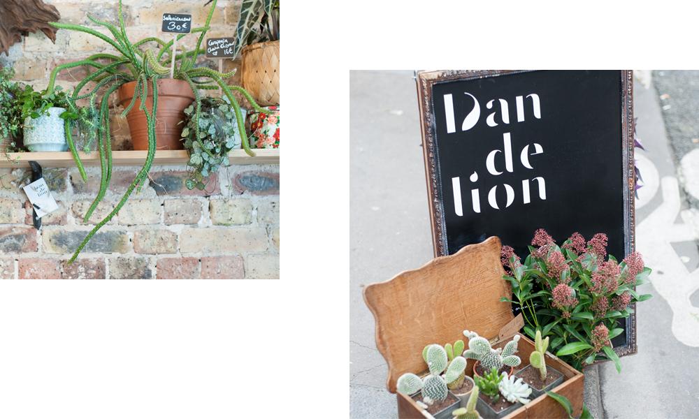 dandelion_interieur_01